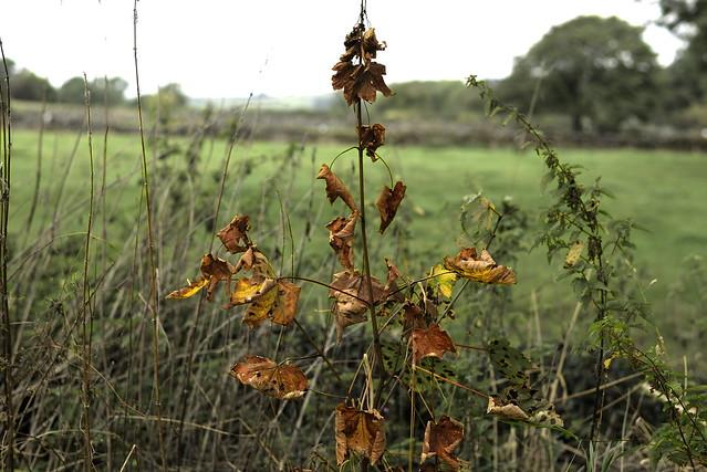 AutumnCometh