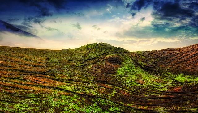 Trunk landscape
