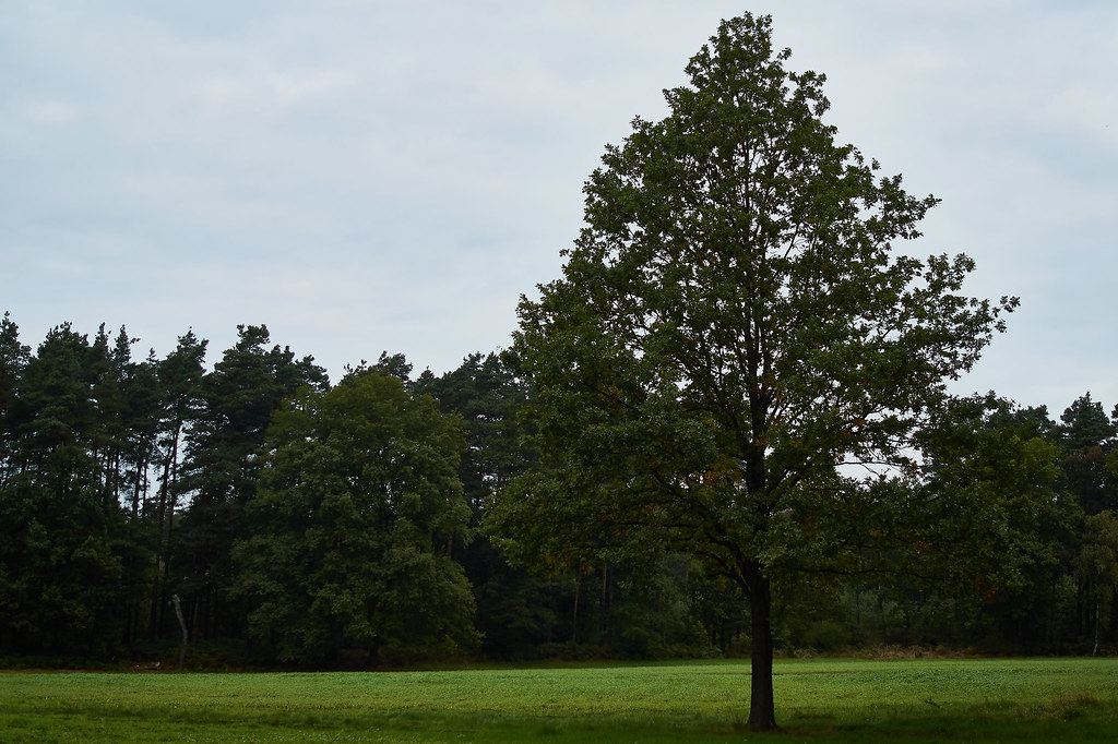 The tree of freedom