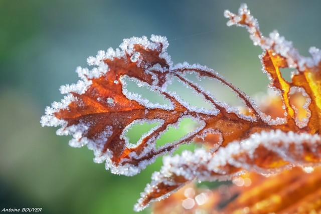 Couleurs d'automne et gelée d'hiver !