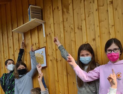 Projekt Wildbienen