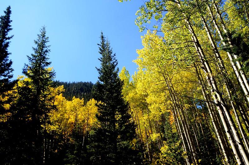 Scenic Drives in Guanella Pass, Colorado (20)