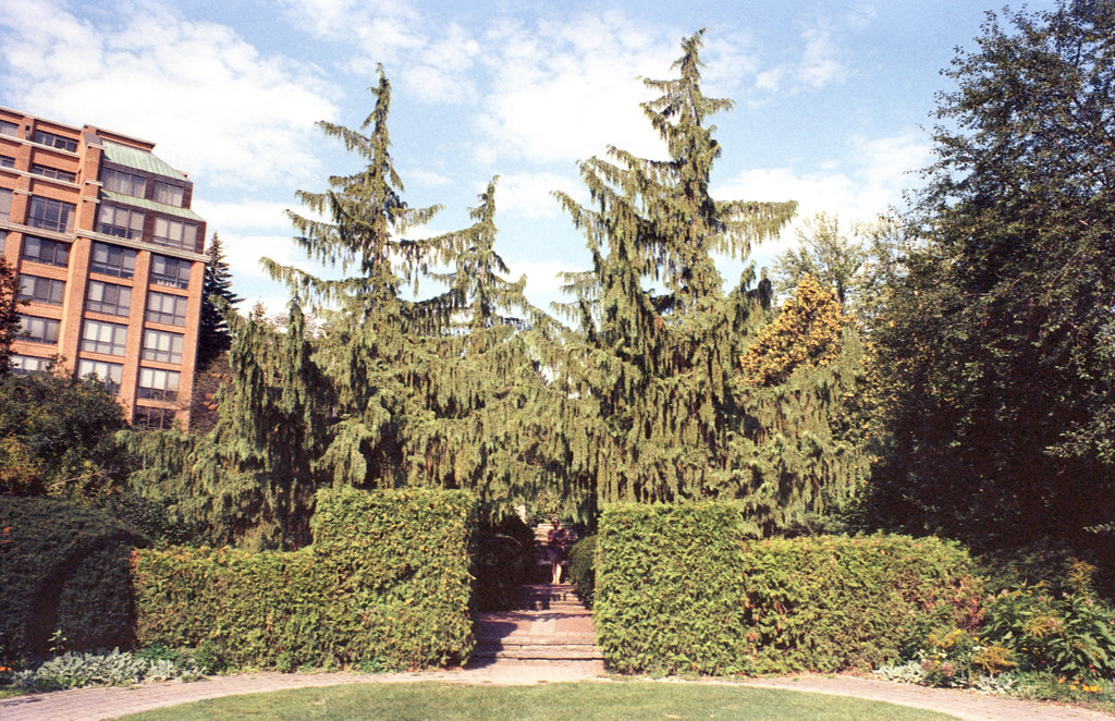Alaxander Muir Gardens View Toward Yonge St Two