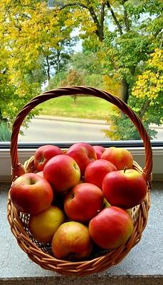 Œwiatowy Dzień Jabłka