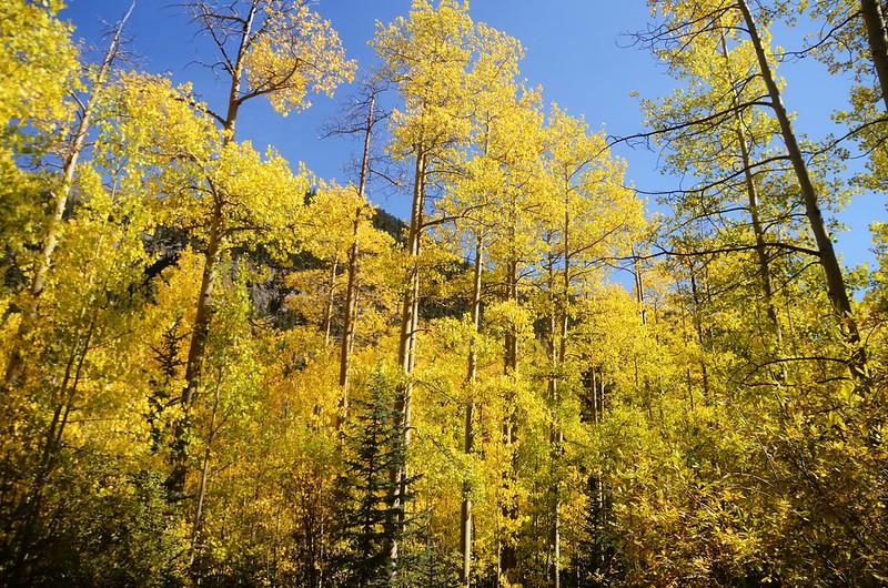 Scenic Drives in Guanella Pass, Colorado (21)