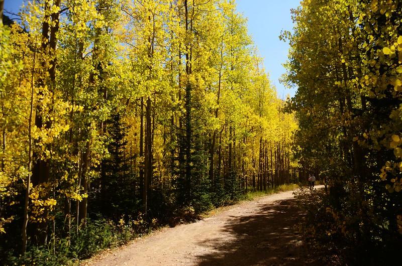 Scenic Drives in Guanella Pass, Colorado (17)