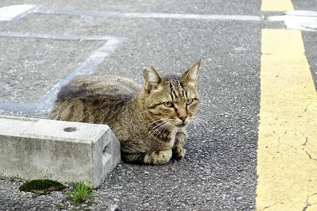 Today's Cat@2021−09−29