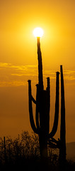 2021 06 Sun and Saguaro in the Picture Rocks Area