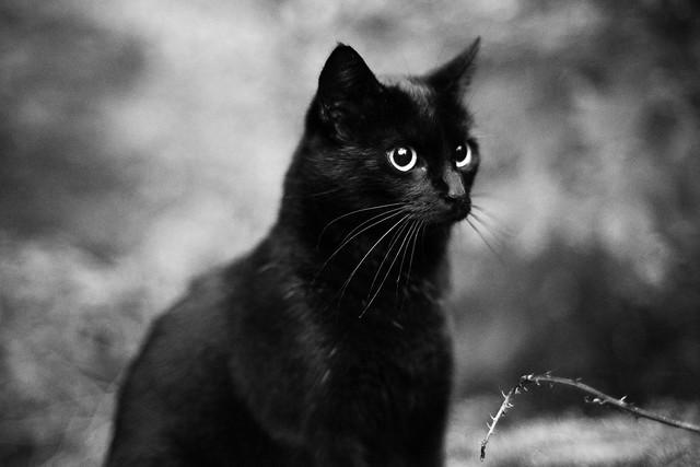 Little black cat in low light