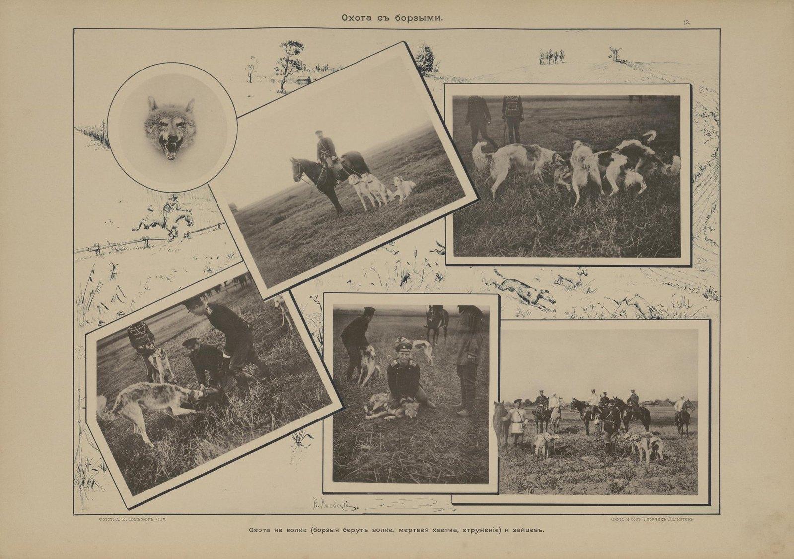 17. Охота с борзыми. Охота на волка (борзые берут волка, мертвая хватка, струнение) и зайцев