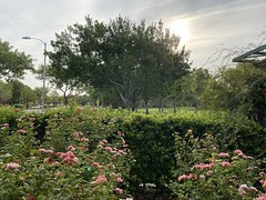 Sunrise, Discovery Park 09.2021