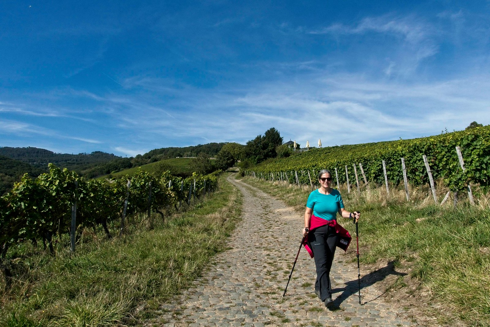 Rückkehr nach Hattenheim durch Rebflächen der Domäne Steinberg