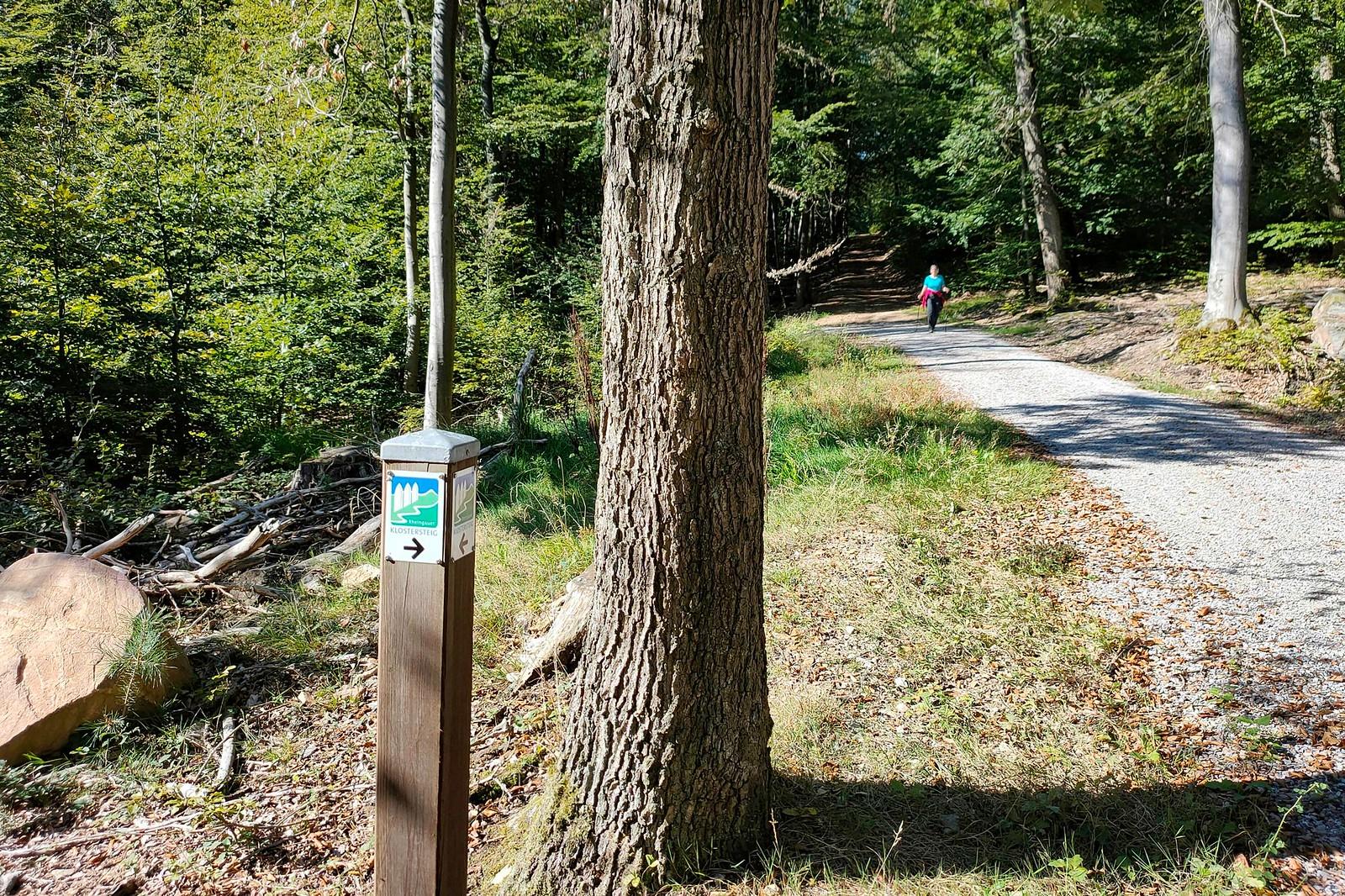 Aufstieg zur Hallgarter Zange, Klostersteig kurzb hinter K634