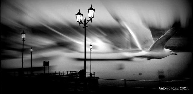 Huelva. Pájaros al alba.