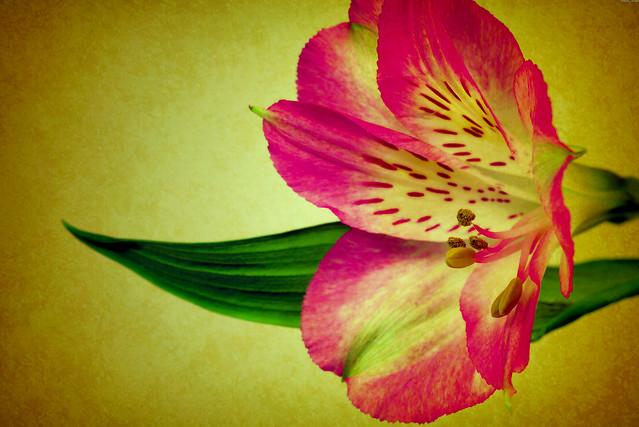 Toronto Ontario - Canada - Allan Gardens Conservatory - Toronto Tropical Garden -  Heritage - Exotic Lily
