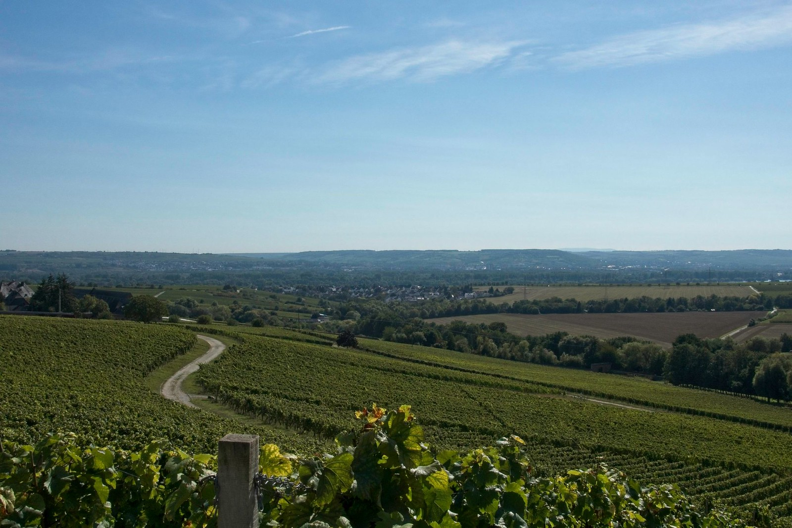 Rückkehr nach Hattenheim durch Rebflächen, Blick über den Rhein nach Rheinhessen mit Donnersberg am Horizont