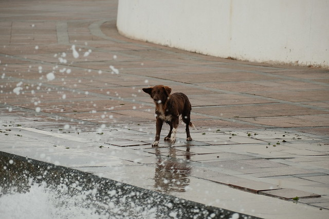 Dog and waves