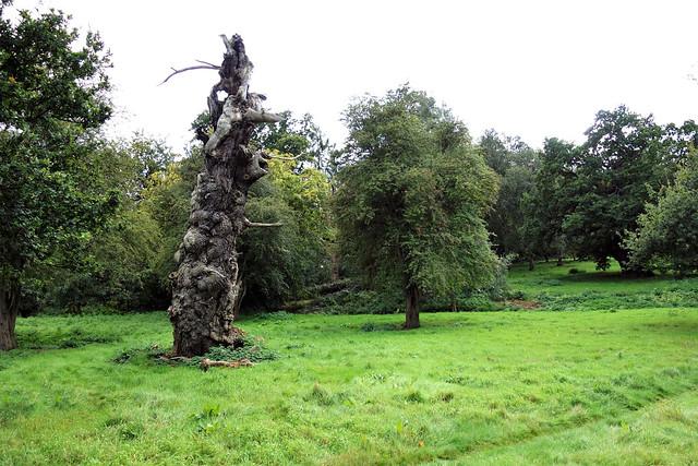 Veteran oaks Hatfield Park