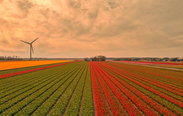 Dutch Parallel Lines.