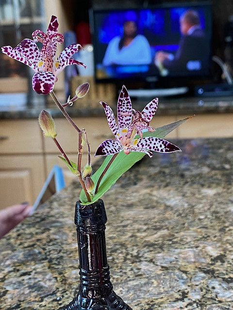 Toad lily!