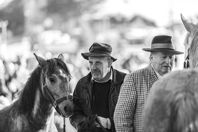 Hats and horses, fun and frolicks  ....
