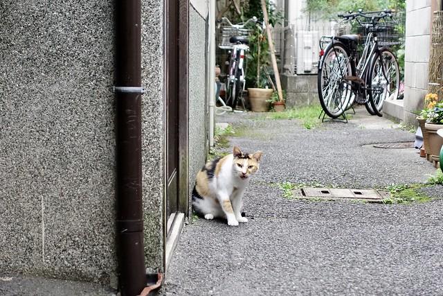 Today's Cat@2021−10−01