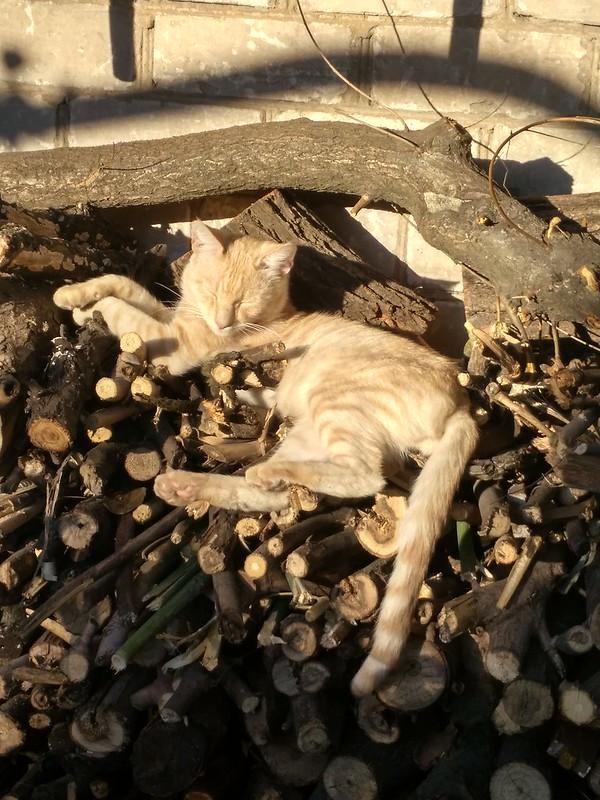 Кот Стаксель отдыхает на дровах. 2021-09-30 16-32-18