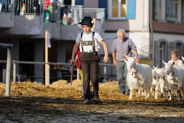Der Junge mit den Ziegen