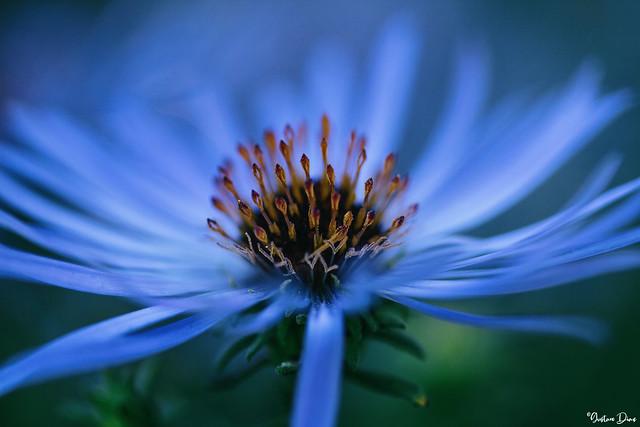 A flower's