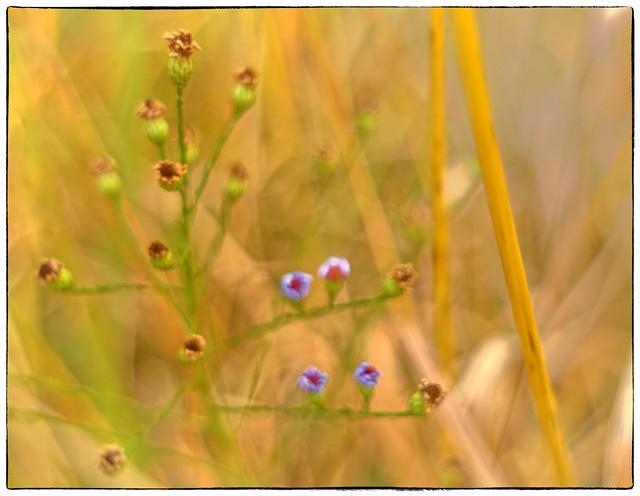 Weeds_DSC_5536