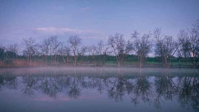 Misty Early Morning at pond