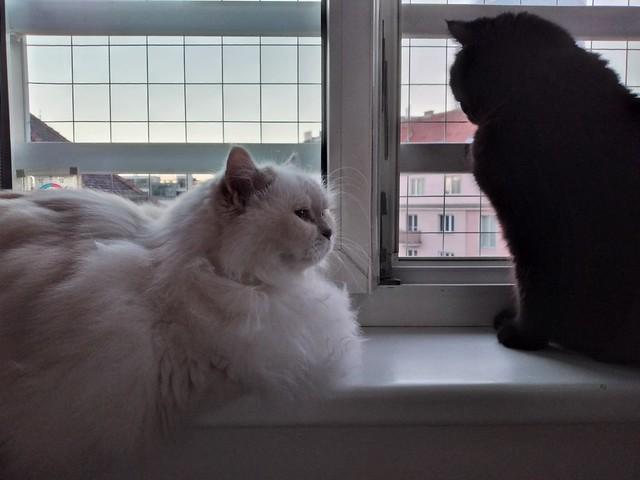 Sirius und Jessie2 am 25.09.21