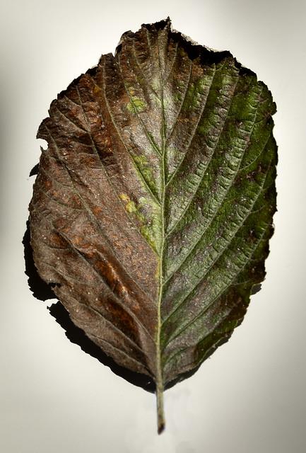 20211001_Autumn Leaf