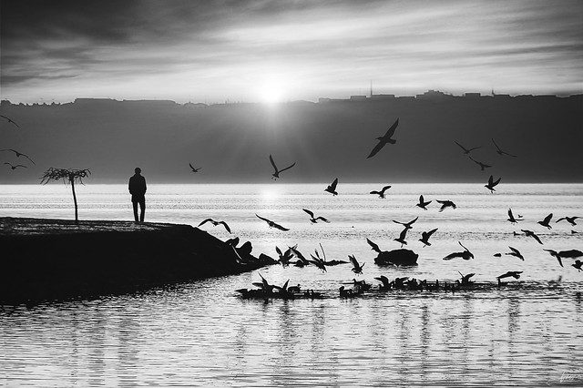 Day End with Seagulls