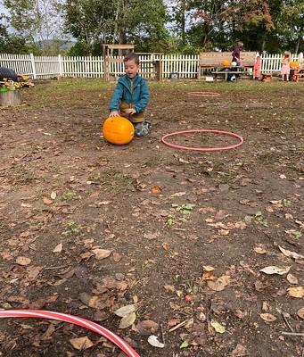 pumpkin rolling
