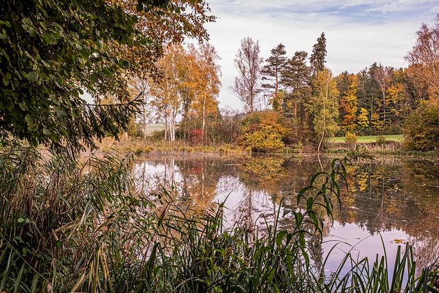 reflected autumn