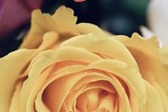 :blossom: