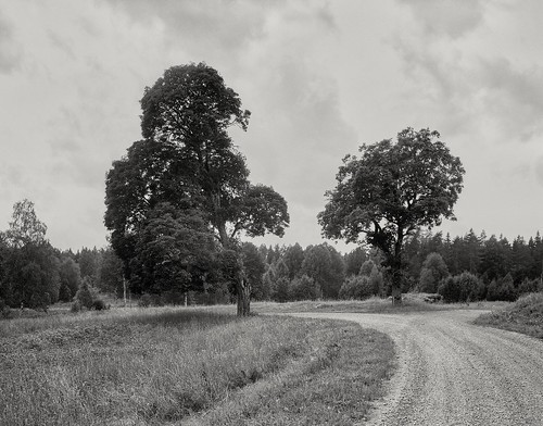Landschaft bei Lövhult, Schweden. Fotografie Großformat 4x5 analog auf Adox 100 CHS II