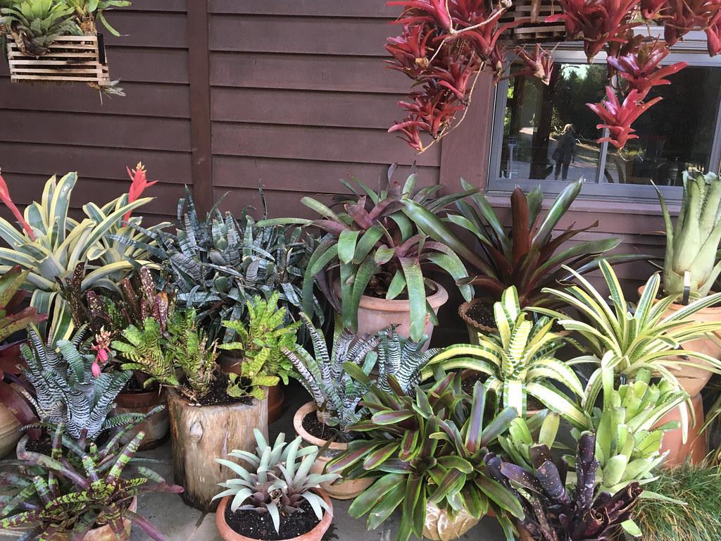 Bromeliad display