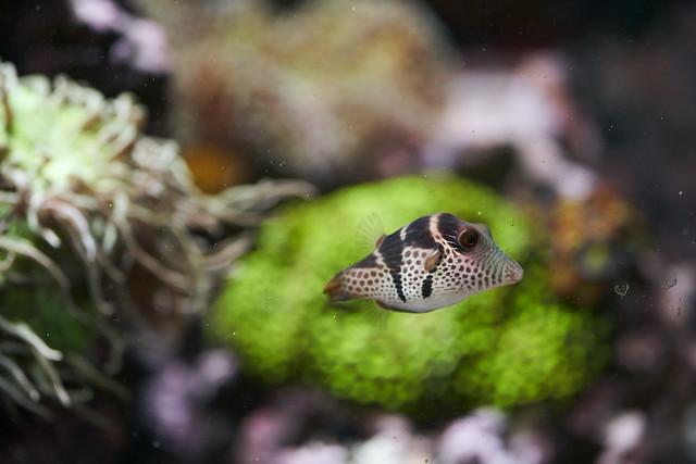 kitchen reef
