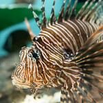 20210904 Hekinan Seaside Aquarium 8