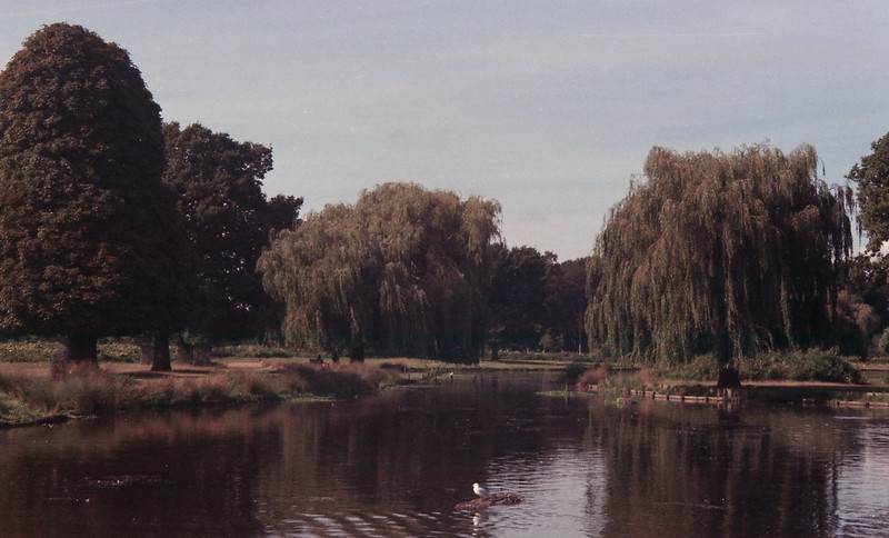 Chinon CP-7m Park Lake