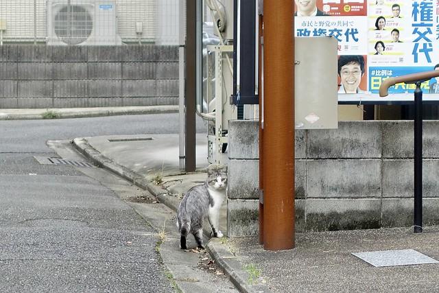 Today's Cat@2021−10−03