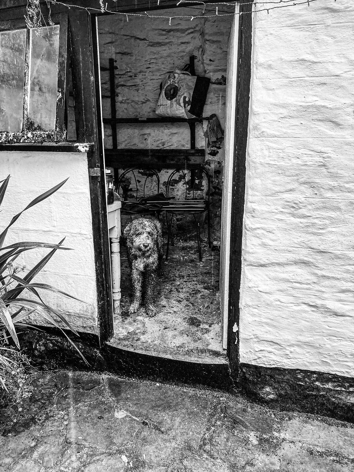 Wet dog shelter