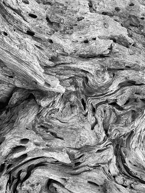 Ansel Adams Jeffrey Pine in Black and White-1