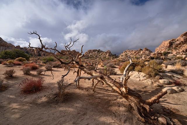 Early Morning Light Show - Joshua Tree National Park, California (explored)
