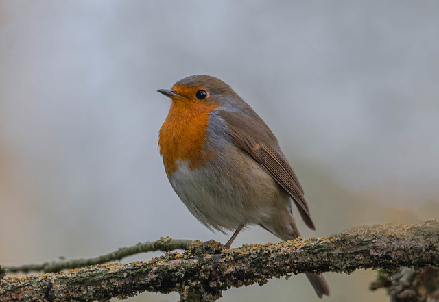 A curious robin :)