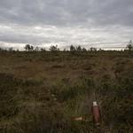 Jordbärsmuren Ålbo naturreservat