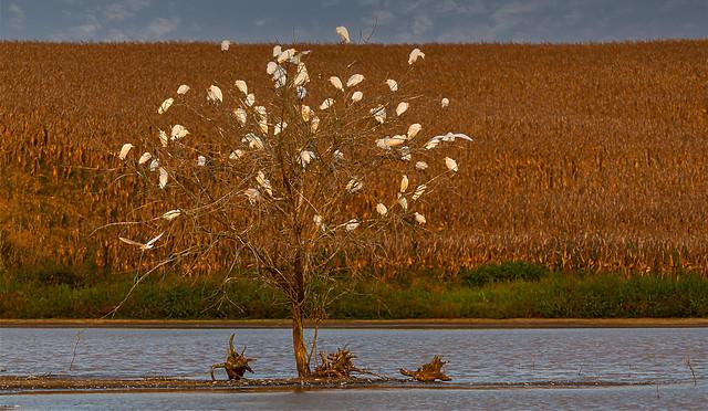 (explore 467 10/04/2021) Bird Tree / Árvore de Pássaros