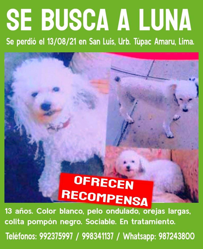 Se busca a Luna. Se perdió en San Luis, Lima.